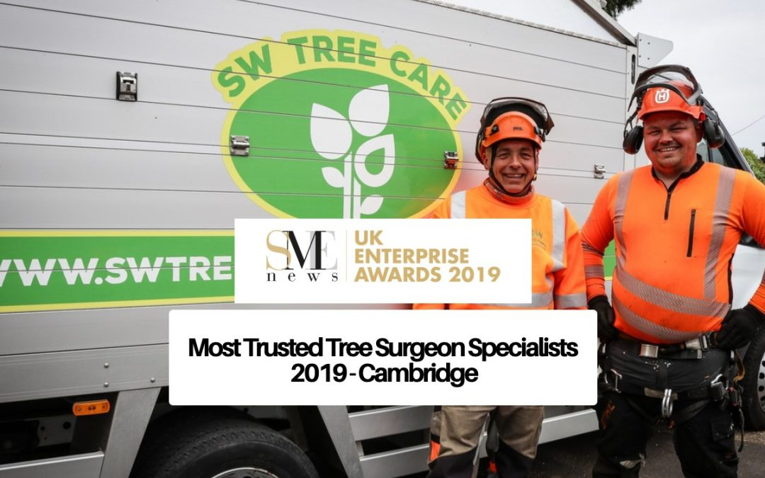 Most Trusted Tree Surgeon Specialists 2019 - Cambridge - Tree