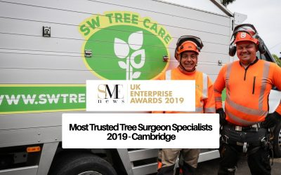 Most Trusted Tree Surgeon Specialists 2019 – Cambridge