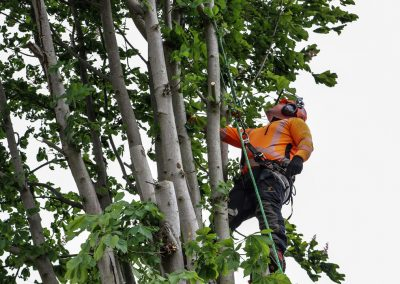 local-tree-pruning-company-cambridge